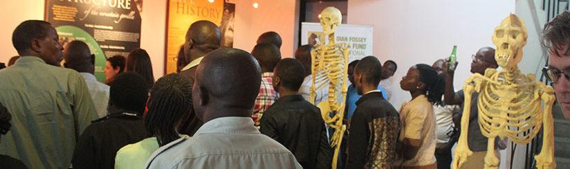 gorilla museum in musanze
